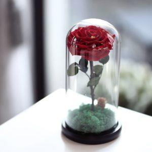 Trandafiri criogenați în cupolă de sticlă