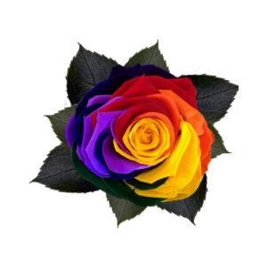 Trandafir colorat